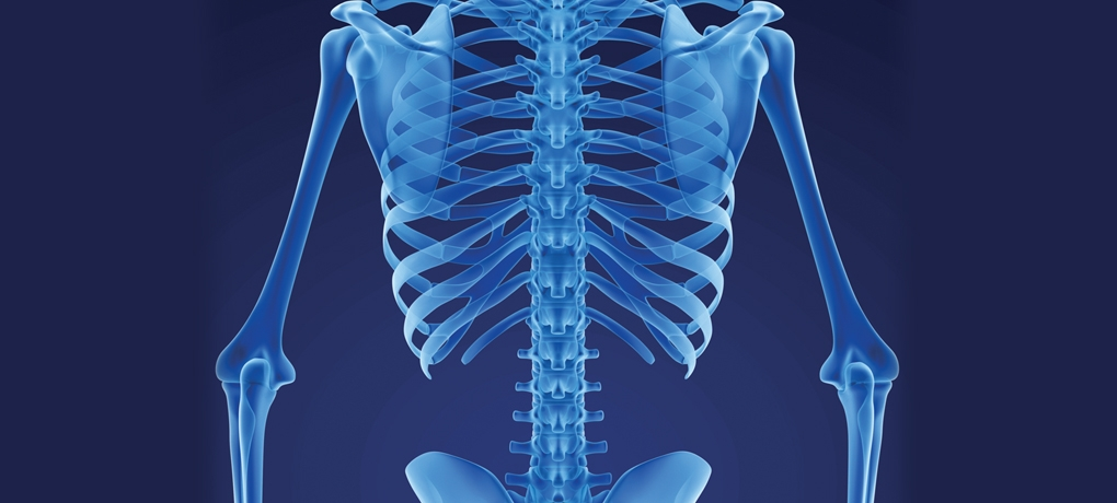 X-ray image of a human body used to illustrate our BTEC Level 3 Applied Science Course