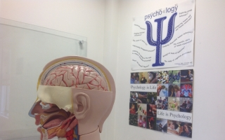 A display in one of our GCSE Psychology Course rooms showing brain functionality